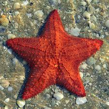 Sea Stars козметика